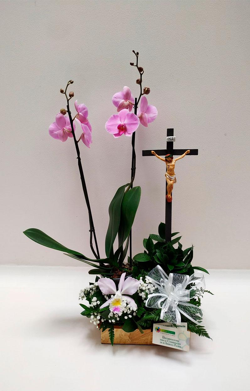 Planta-de-Phalaenopsis-con-cristo