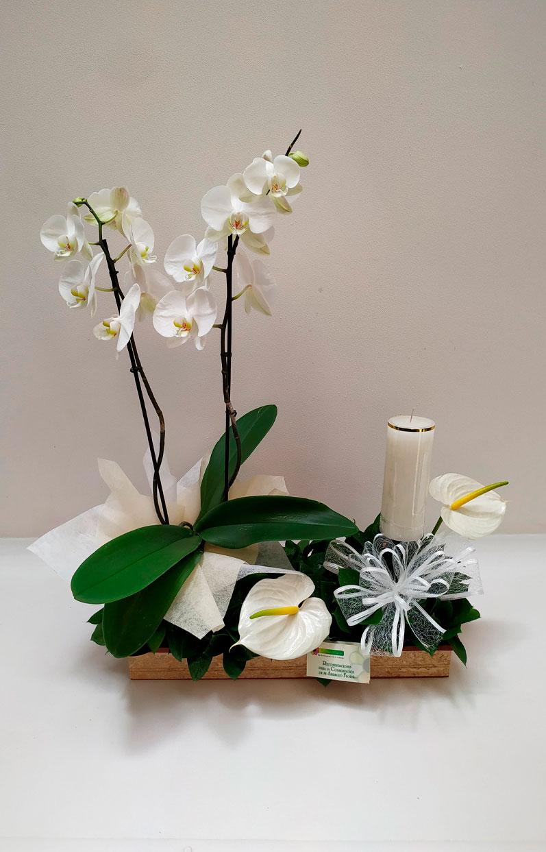 Planta-de-Phalaenopsis-con-velón
